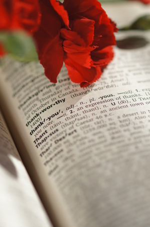 Red carnation on a dictionary photo