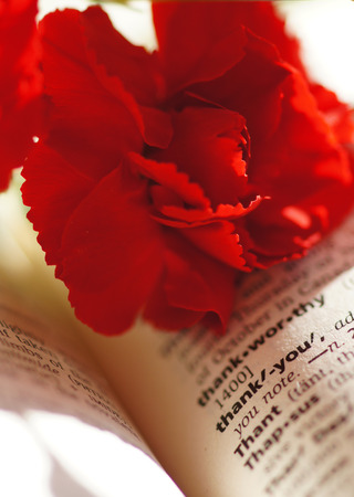 Red carnation on a book photo