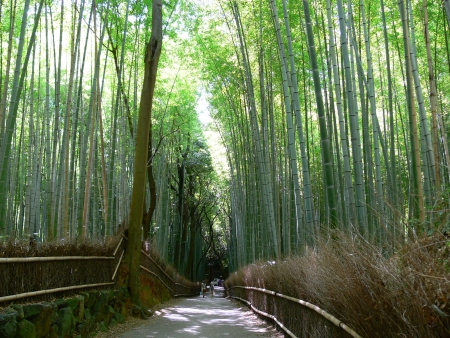 Bamboo Grove Forest in Kyoto Prefecture, Japan photo