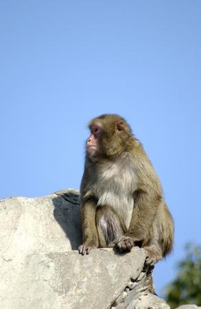 Monkey Sitting on Rock photo