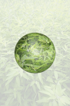 transparence: Green Grass in Circle