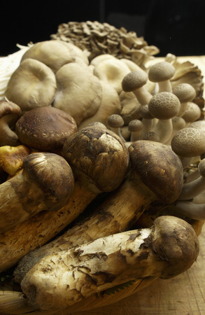 gro: Various Kinds of Mushroom