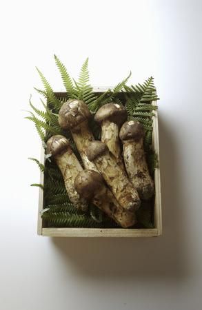 Matsutake Mushroom in Wooden Box photo