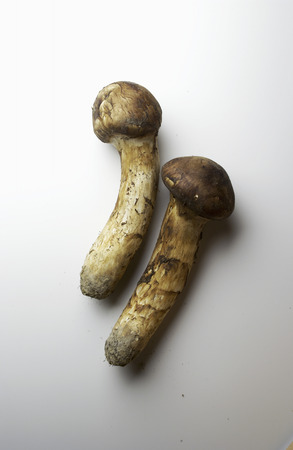 Matsutake mushrooms,white background photo