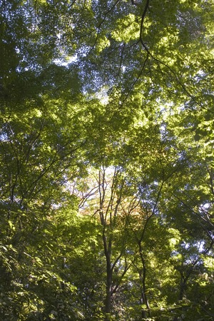 directly: Trees,Directly Below