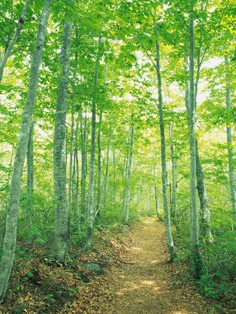treelined: Tree-lined Street