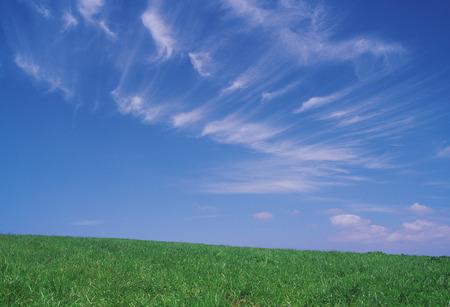 grassfield: Grassfield Stock Photo