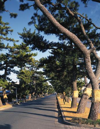 treelined: Tree-lined street,Hamamatsu,Shizuoka Prefecture,Japan