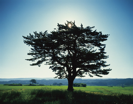 prefecture: Tree in a field,Akita Prefecture,Japan
