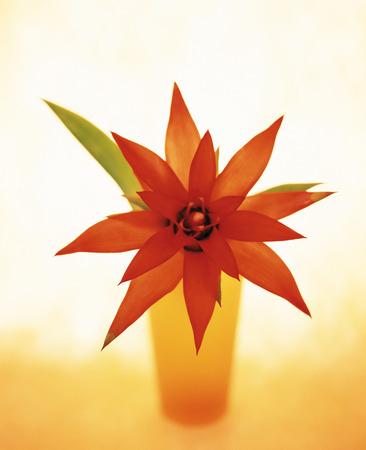 pineapple tree: Flor de un �rbol de la pi�a en un florero