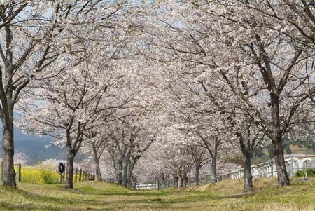treelined: Treelined footpath