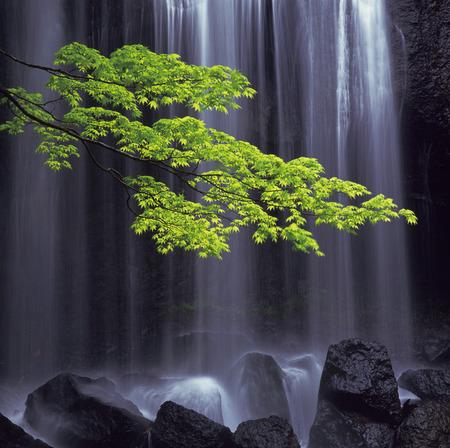 fukushima: Waterfall and a leafy green branch,Inawashiro-machi,Fukushima Prefecture,Japan Stock Photo
