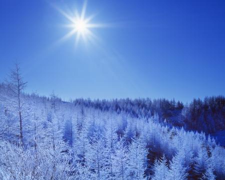 honshu: Forest in winter,Nagano Prefecture,Honshu,Japan