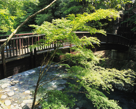 honshu: Warabe bridge,Shizuoka Prefecture,Honshu,Japan