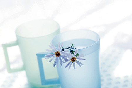 perennial: Perennial asters in a cup of water Stock Photo