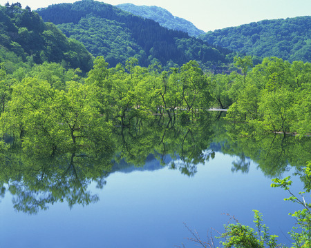 prefecture: Green trees reflected on water surface,Yamagata prefecture,Japan