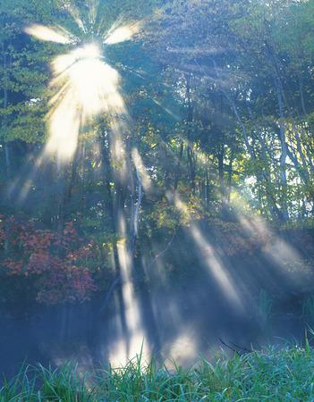 Sunbeam through trees,Daisetsu plateau,Hokkaido prefecture,Japan photo