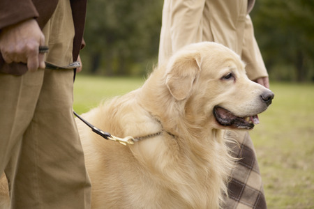 Couple taking golden retriever for a walk in the park photo