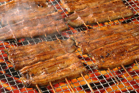 plurality: Grilled eels