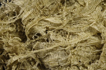 alga marina: Primer plano de algas Foto de archivo