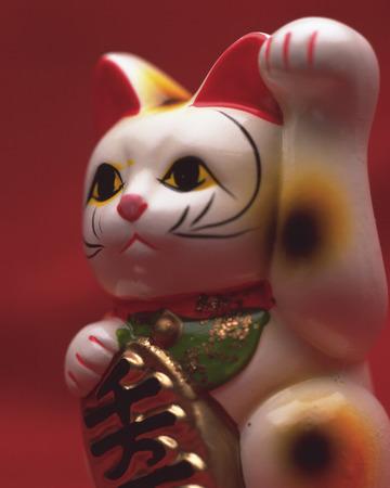 se�al de silencio: Tentando el gato Foto de archivo