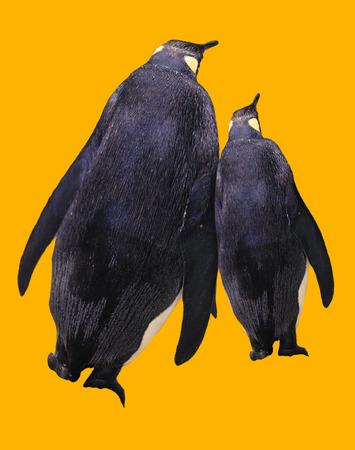 cuddling: Cuddling Penguins, CG Stock Photo