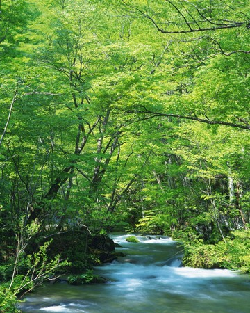 verdure: Fresh Verdure and Oirase Mountain Streams