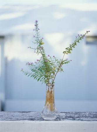 hydroponics: Green hydroponics