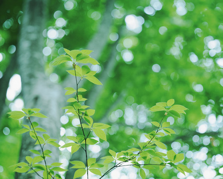 greenness: Greenness of a beech forest Stock Photo