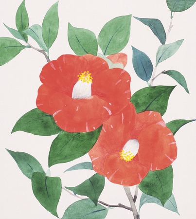camellia: Illustration of camellia Stock Photo