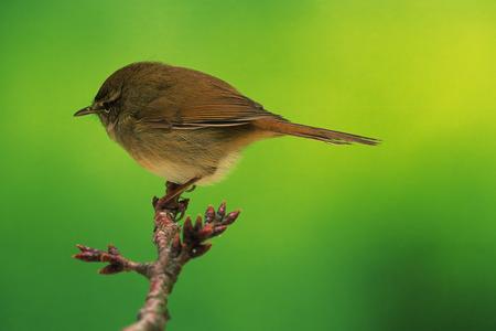 ruise�or: Nightingale