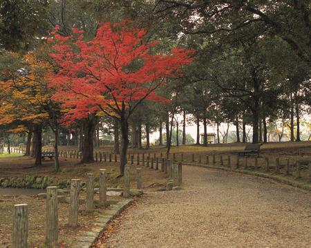 nara park: Nara Park
