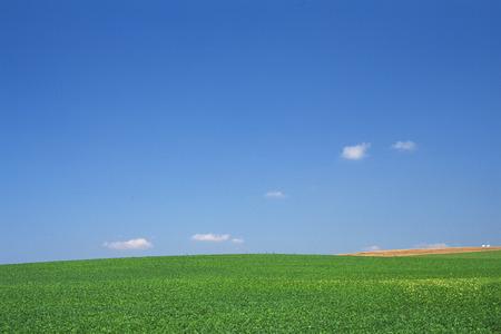 biei: Scenic view in Biei, Hokkaido Stock Photo