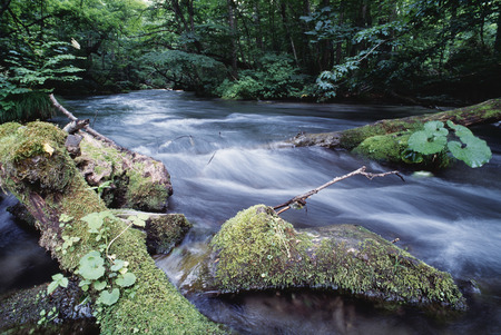 early summer: Oirase mountain stream in early summer