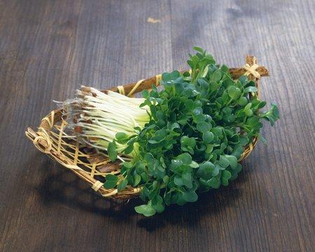 Radish sprouts photo