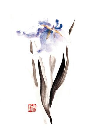 laevigata: Iris laevigata