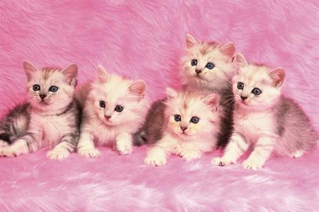 snugly: Kittens