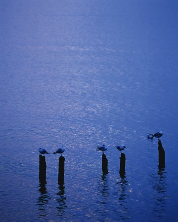 waterfowl: Waterfowl