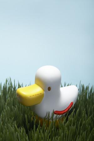 pato de hule: Pato de goma en la hierba verde Foto de archivo