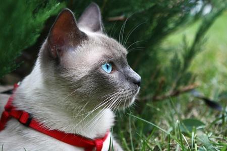 Cats eye, natural environment