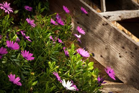 kyklades: Flowers closeup Stock Photo