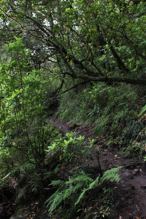 Narrow hiking trail, levada, in the forest of Madeira on a stormy day Portugal