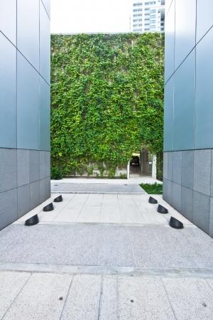 modern corridor design with vertical garden at the end  Stock Photo