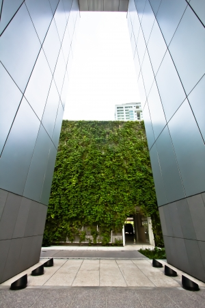 modern corridor design with vertical garden at the end   photo