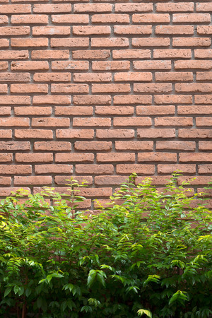 red brick: Background - the red brick wall and plant
