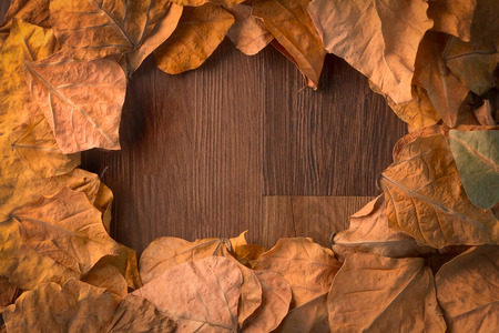the fall: autumn leaves fall to wood floor background frame Stock Photo