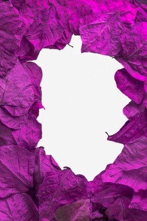 leaves frame: purple leaves frame with white background.jpg Foto de archivo