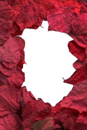 leaves frame: red leaves frame with white background.jpg
