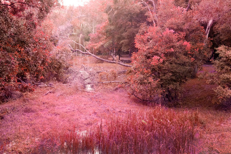 mistery red forest in autume season Stock Photo