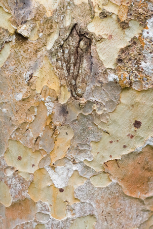 Tree bark texture yellow color mix